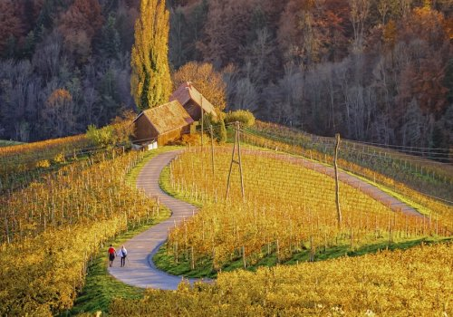 Encounter intriguing vineyards of Slovenia and Croatia